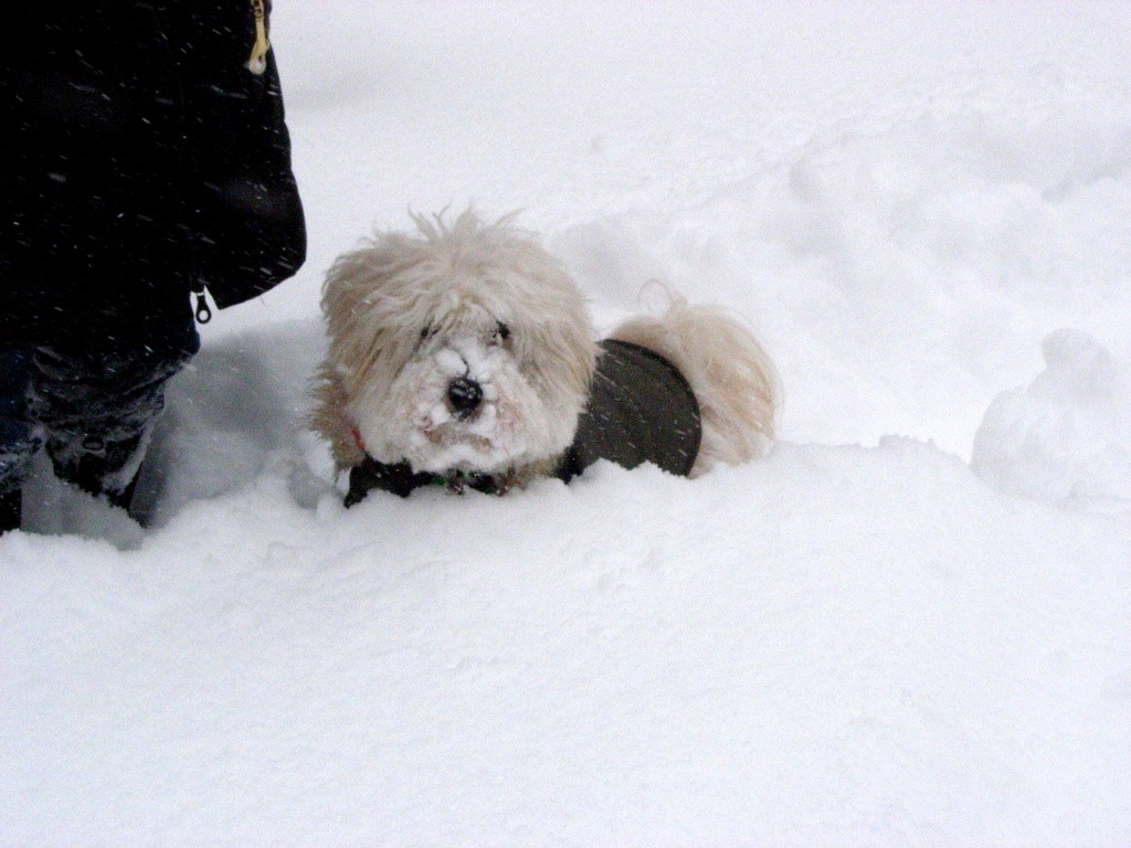 Charley in the snow